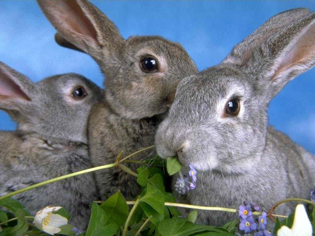 Как выращивать кроликов правильно.