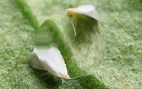 обработка растений от вредителей без химии