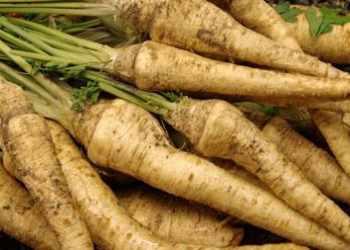 Пастернак овощ для здорового питания.