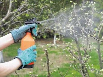 Медный купорос - применение в садоводстве весной