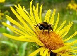 Вредные или полезные насекомые в вашем саду.