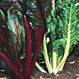 Свекла мангольд - особенности выращивания.