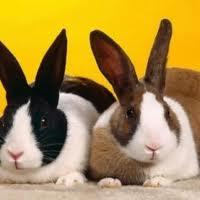 Как отбирать кроликов для случки.