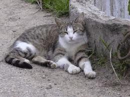 Всякая ли кошка домашнее животное.