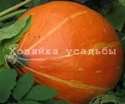 Лучшие сорта тыквы для Сибири.