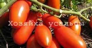 Лучшие сорта томатов для открытого грунта в Сибири.