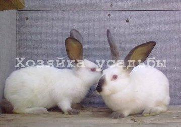 Породы кроликов для разведения на личном подворье.