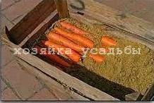 Как хранить морковь в погребе всю зиму.