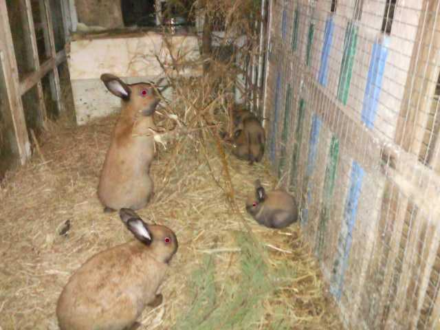 Правильное кормление кроликов в домашних условиях.