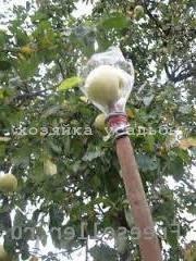 Способы хранения яблок.