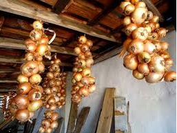 Как хранить лук в домашних условиях зимой.