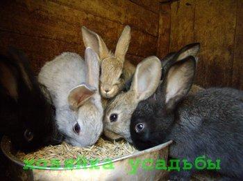 Отчего происходит каннибализм у кроликов.
