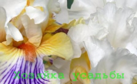 Цветы ирисы, посадка и уход.