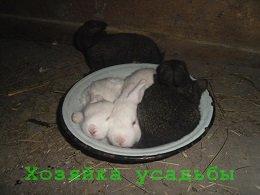 Размножение кроликов в домашних условиях для начинающих.