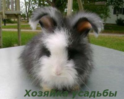 разведение кроликов в домашних условиях для начинающих1