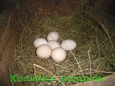 Кормление кур несушек в домашних условиях зимой и летом.