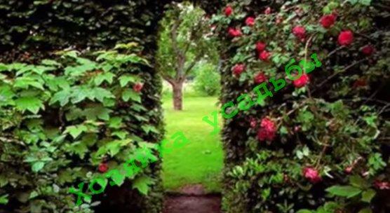 Такие разные кустарники для живой изгороди.