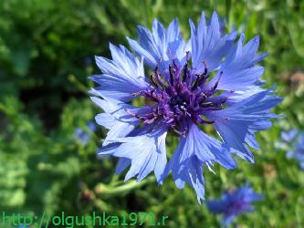 Многолетние цветы, цветущие всё лето, для дачи.
