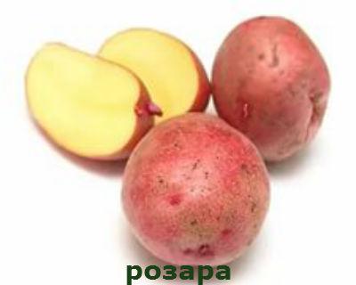 розара