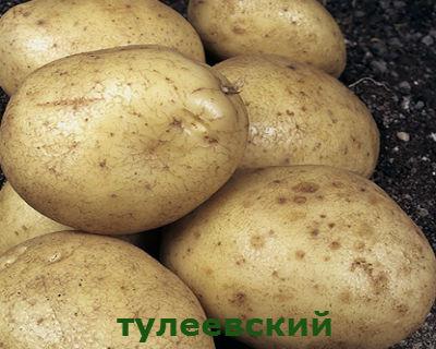 тулеевский