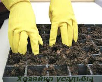 Грунт для выращивания рассады3