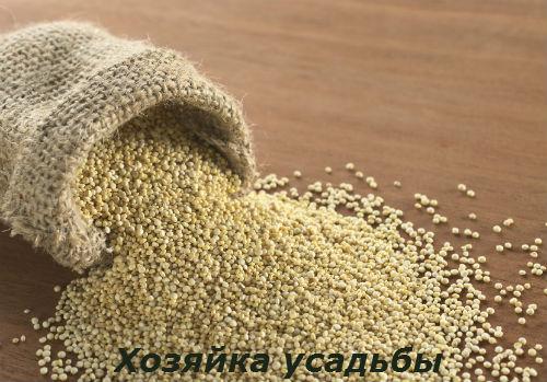 Амарант выращивание из семян.7