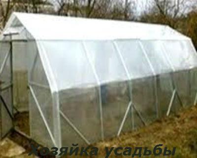 Выращивание баклажанов в теплице2.
