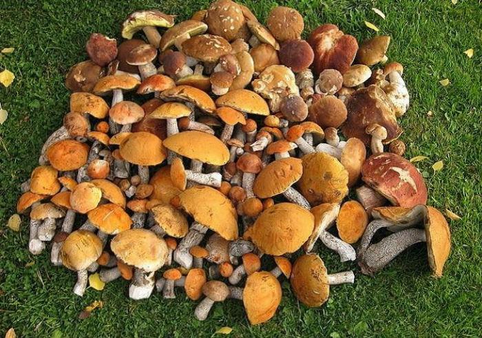Как подготовить грибы к маринованию.