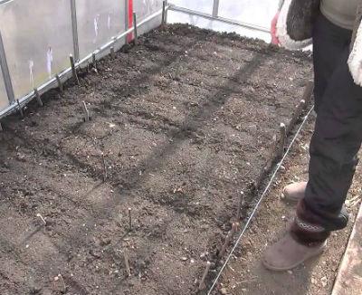 Подготовка почвы для помидоров в теплице