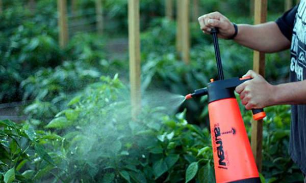 Внекорневая подкормка томатов в теплицах и грунте