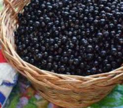 Джем из чёрной смородины, рецепт на зиму на любой вкус